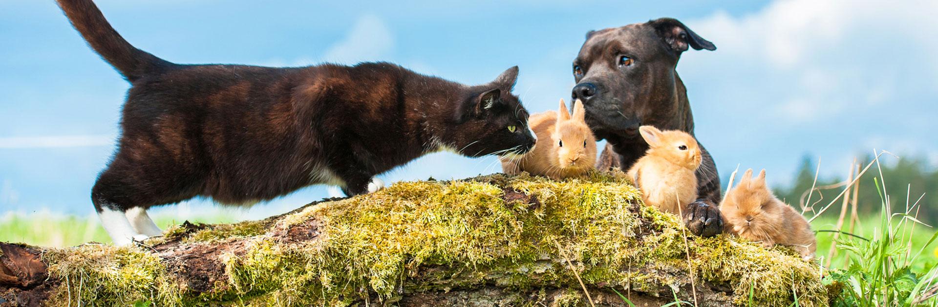 Katze, Hund und drei kleine Hasen im Freien