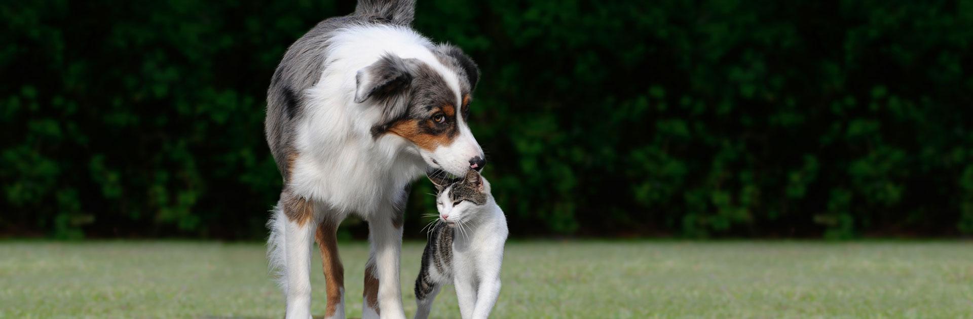 Katze und Hund schmusen im Freien